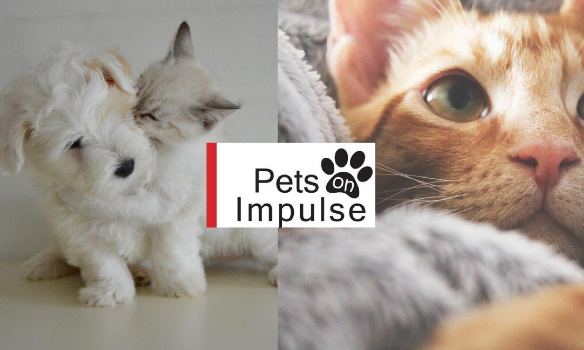 Pets On Impulse